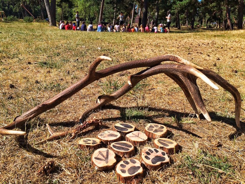 DEMANDA NATURAL: El bosque como atracción para el turismo y la educación en la biodiversidad