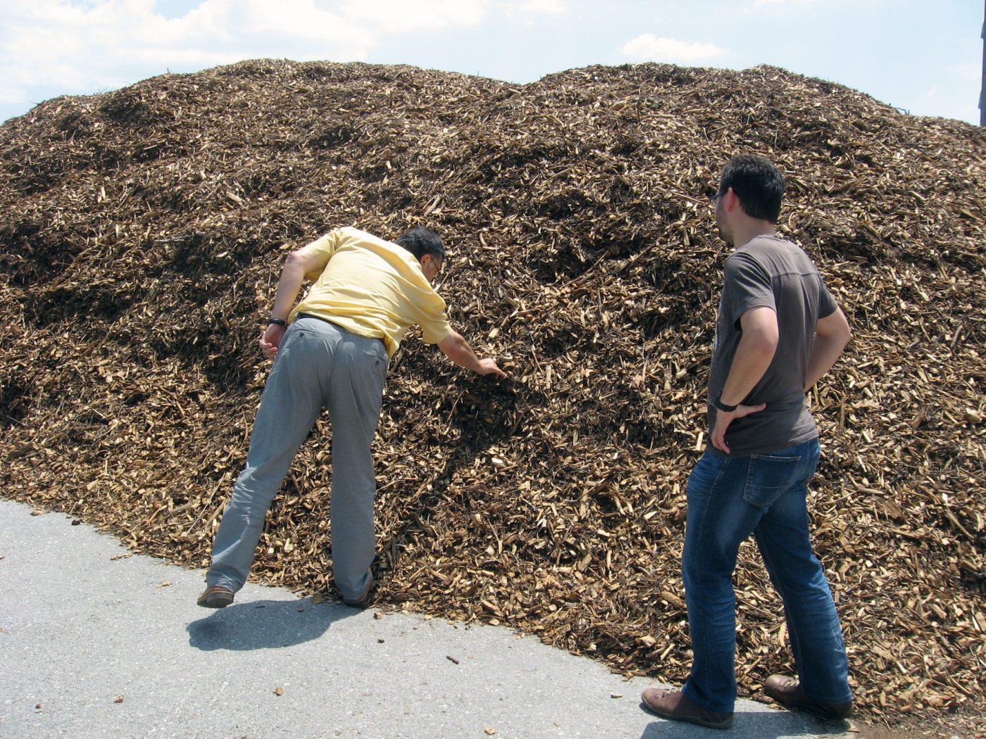 ¿Qué pasa con la biomasa?