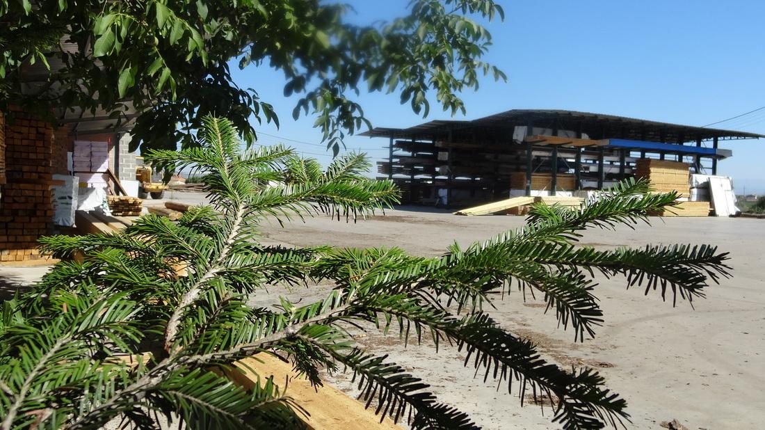 """Montse Borniquel: """"El sector público también cree en la madera"""""""