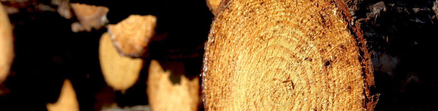 CARMO WOOD lanza su nuevo catálogo de maderas