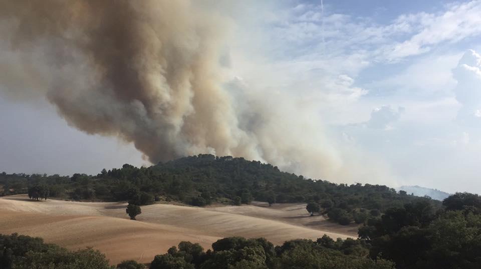 Reducir el riesgo de incendios mediante el aprovechamiento de biomasa