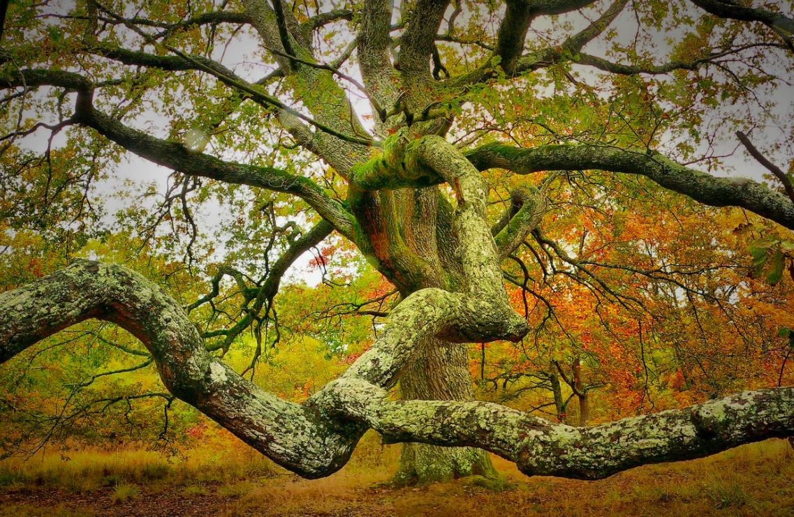 Fantasía natural: Formas inesperadas de los árboles