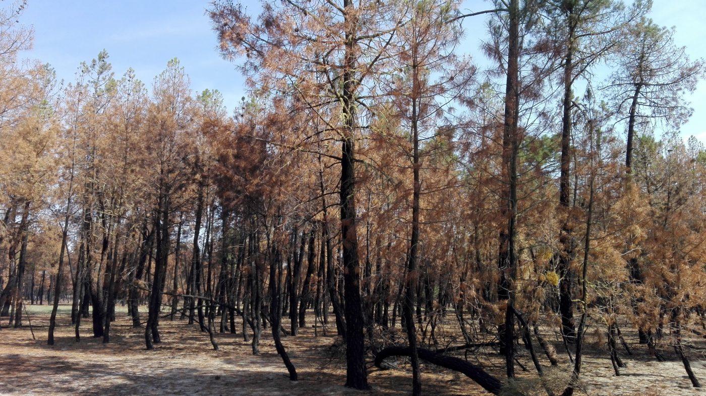 Subasta de la madera quemada en el incendio de Nieva