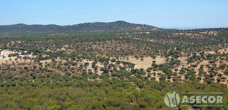Extremadura contará con una ruta turística sobre el corcho