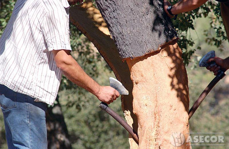 El grupo operativo SUBER se plantea como objetivo mejorar la seguridad del sacador de corcho