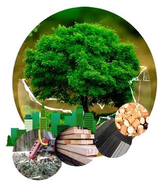En marcha la web para asistir al primer Congreso Nacional de Bioeconomía Forestal
