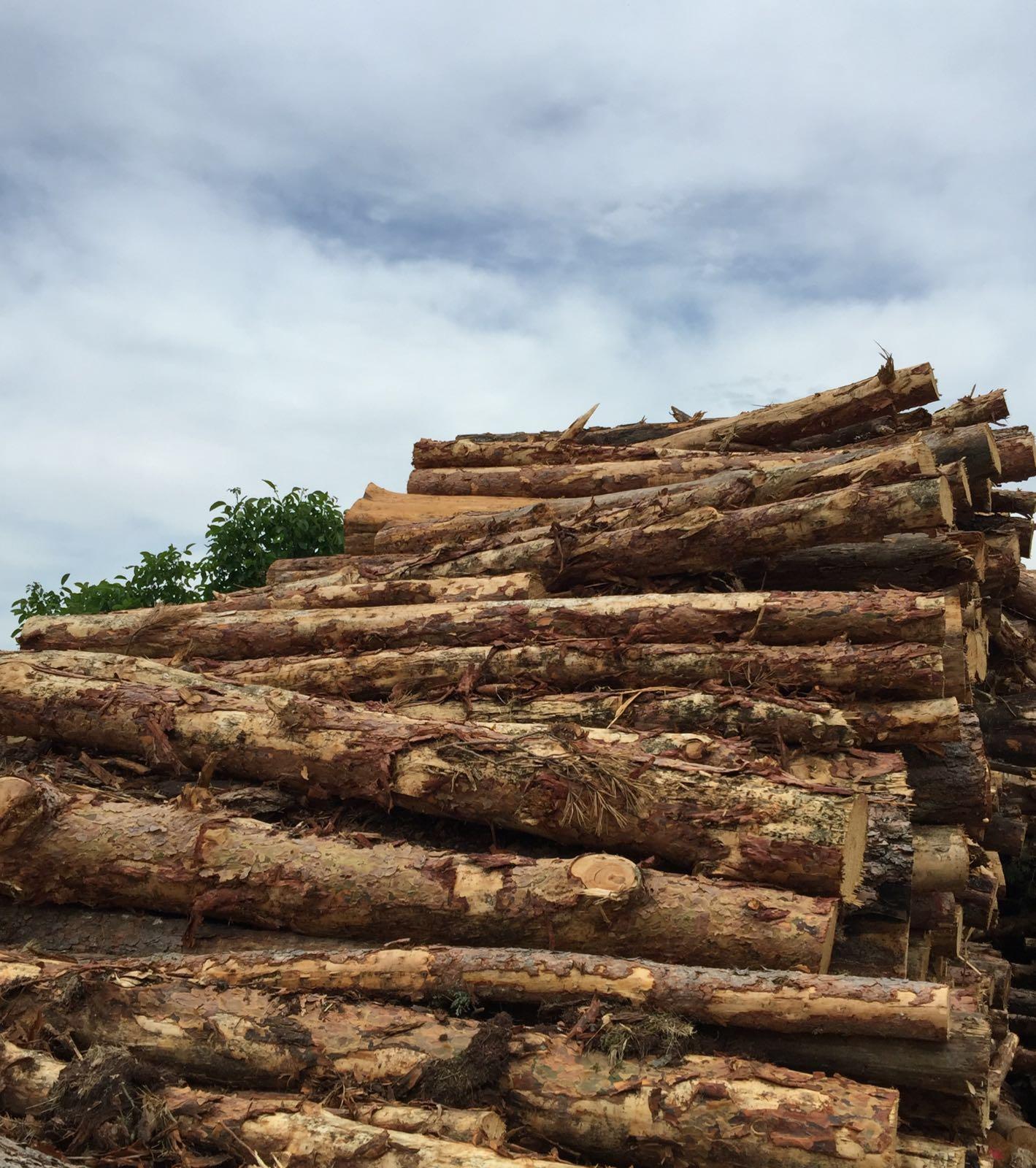 El pasado año se subastó en España madera por un valor de 103,8 millones de euros