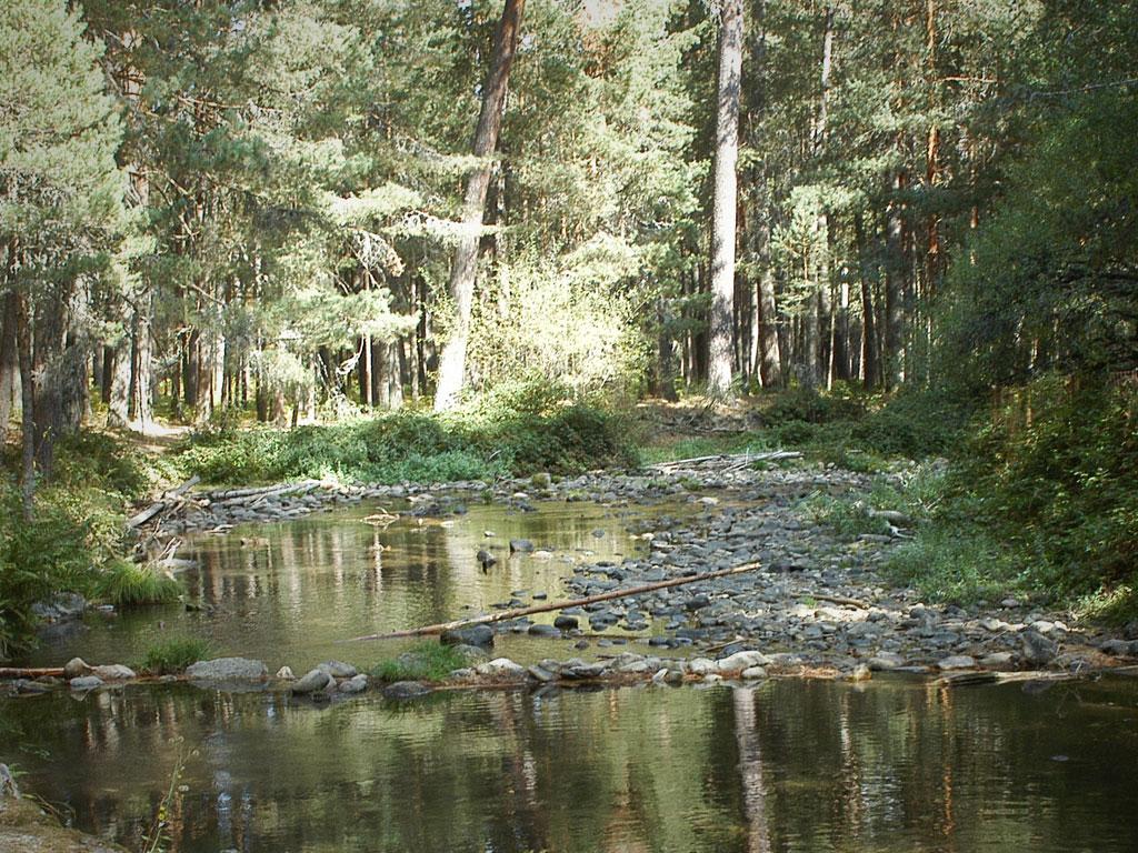 Tres pinares certificados FSC serán laboratorios naturales donde mejorar la adaptación de los bosques españoles al cambio climático