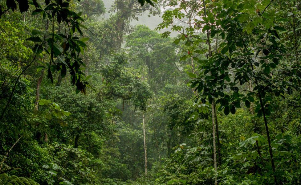 La UE, Japón y EE. UU. importaron madera ilegal de la Amazonia procedente de una zona afectada por una masacre