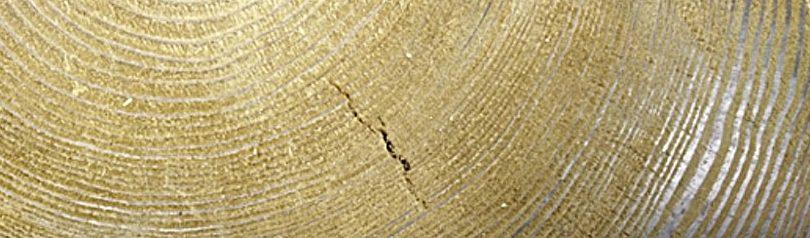 BROOKHUIS presenta su nuevo detector de grietas internas en la madera