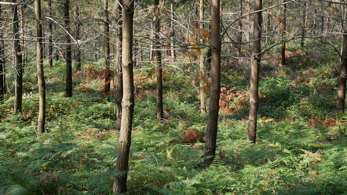 CENTRAL FORESTAL cumple 50 años de liderazgo en el suministro de madera y biomasa