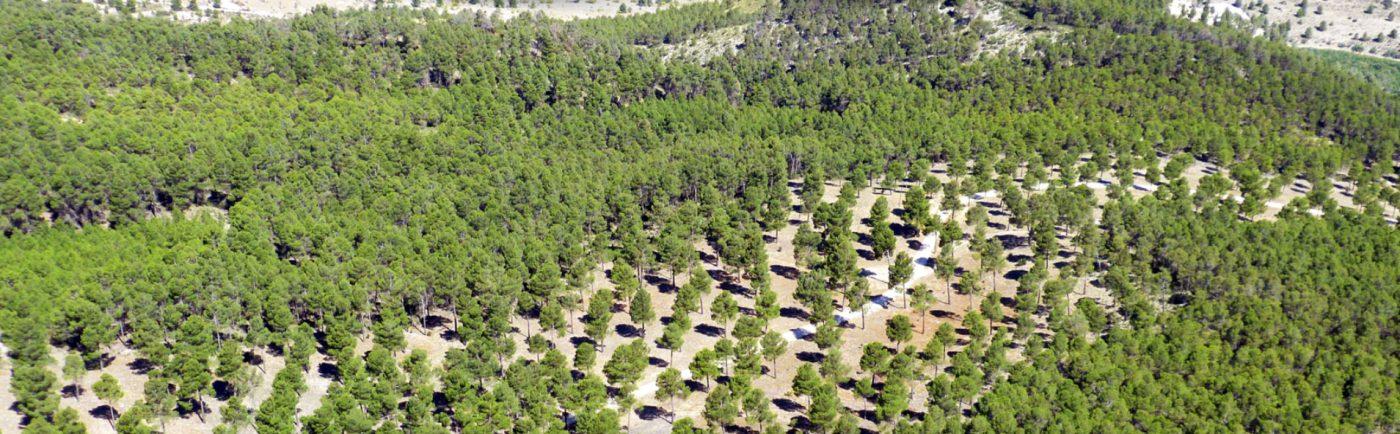 HUF España se adhiere al LIFE FOREST CO2
