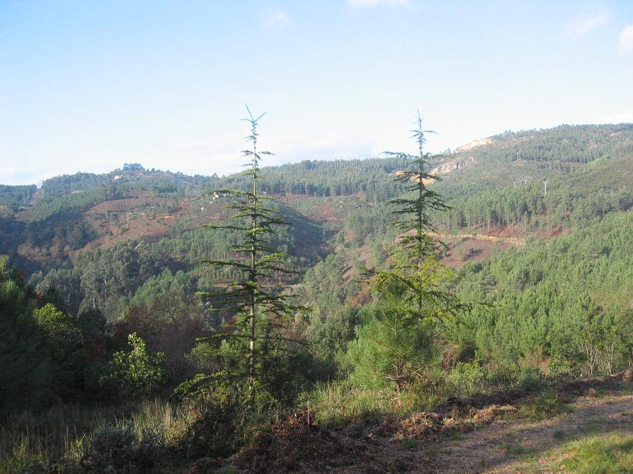 PROMINIFUN propone incentivar los esfuerzos en agrupar aspectos de la gestión del territorio