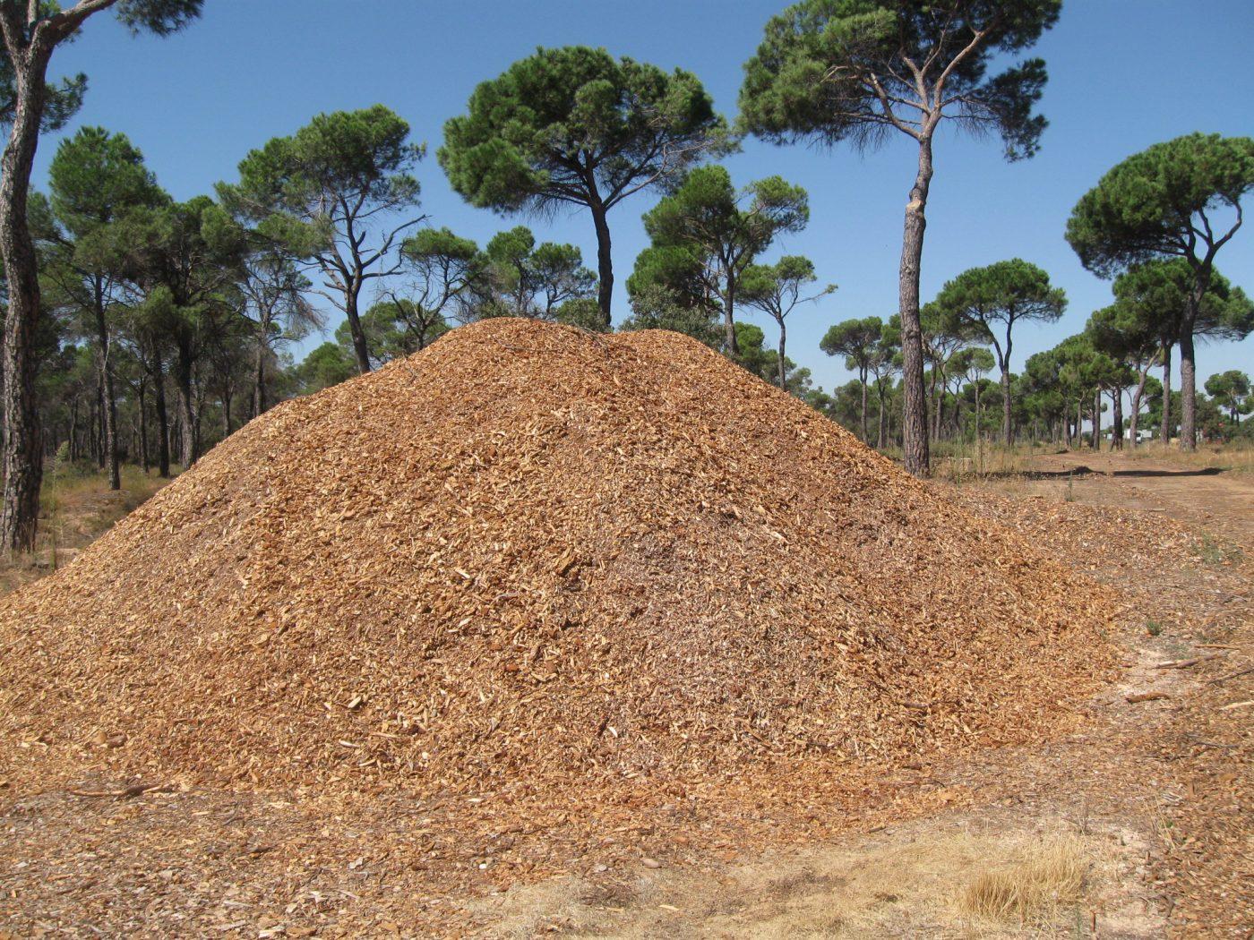 El Gobierno de Castilla-la Mancha apuesta por la sustitución de calderas de energía fósil por biomasa forestal para reducir la emisión de CO2 a la atmósfera