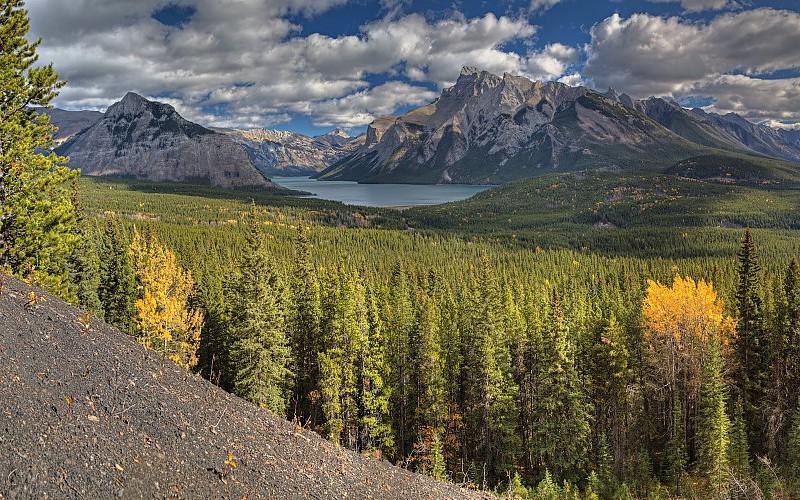 Un informe muestra el estado de los bosques en Canadá en 2020