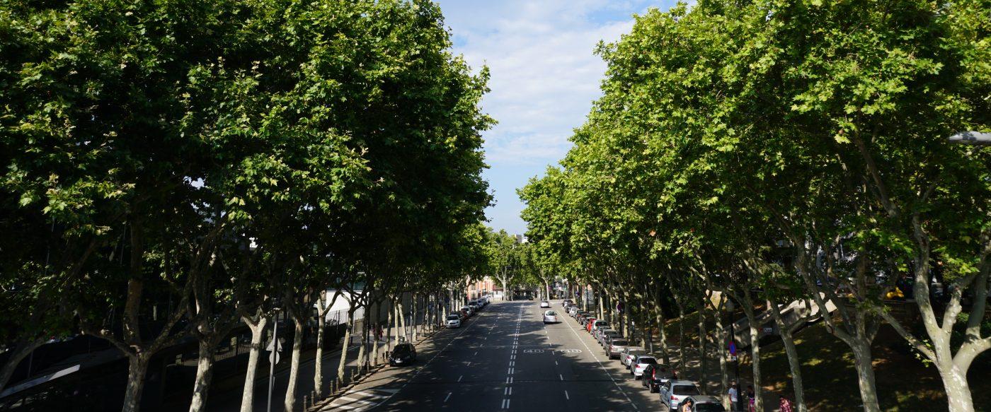 Las ciudades españolas necesitan contar con planes de gestión del arbolado urbano