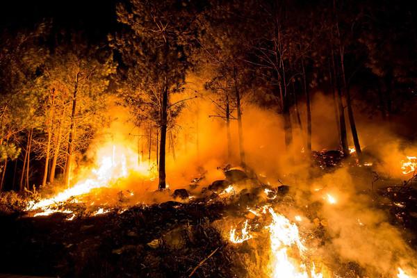 La gestión de la Administración de la madera quemada en Galicia ha causado importantísimas pérdidas a los propietarios