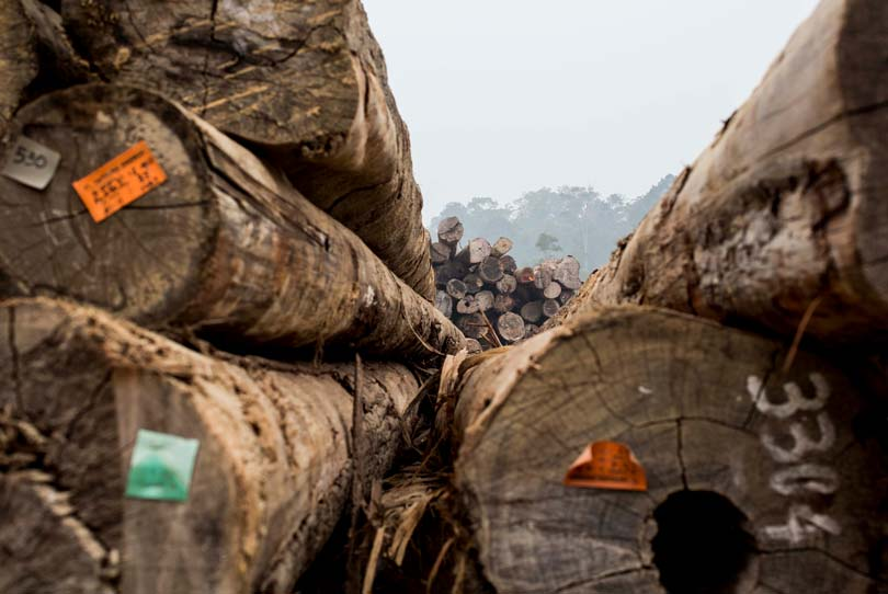 Simposio para la industria de la madera sobre los últimos avances de los AVA y las licencias FLEGT