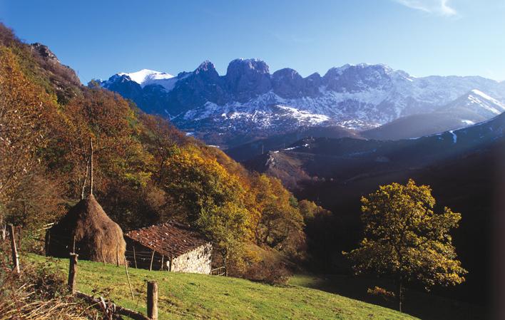 La certificación forestal FSC mejorará la salud de los espacios naturales gallegos y asturianos