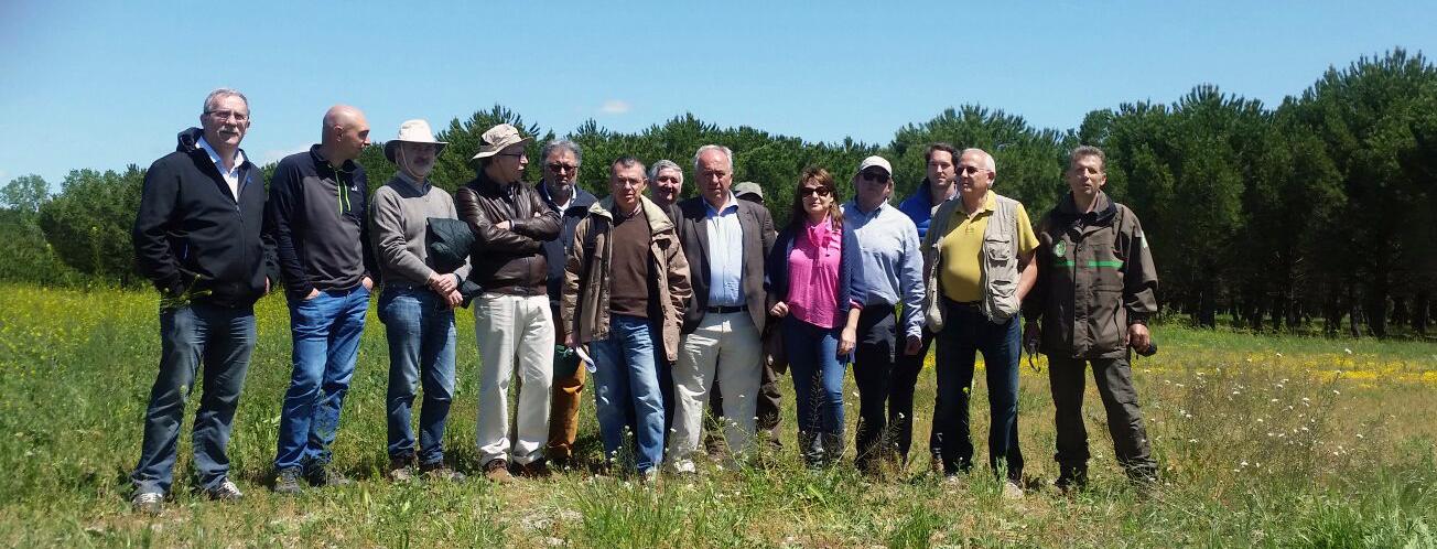 Miembros de COSE visitan plantaciones y campo de ensayo de pino piñonero injertado en Valladolid