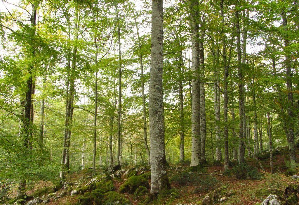 El FBYCC organiza la jornada «Bosques, mecanismos de mercado y oportunidades»