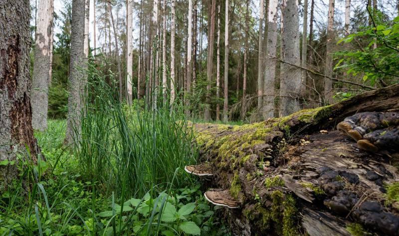 El Tribunal Europeo condena a Polonia por talas en el bosque protegido de Bialowieza