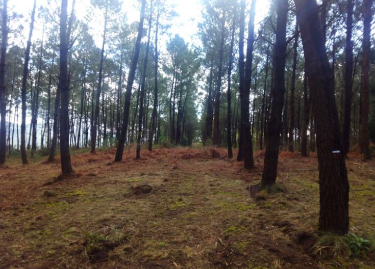 La certificación forestal FSC como instrumento de gestión forestal adaptativa