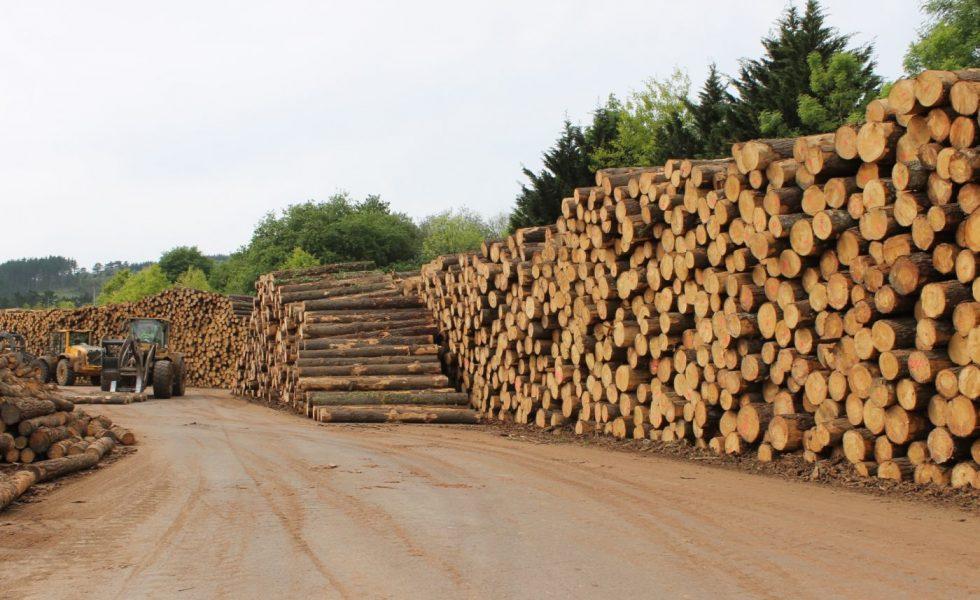Los montes generan al Estado 25 M€ en madera, según MADEREA