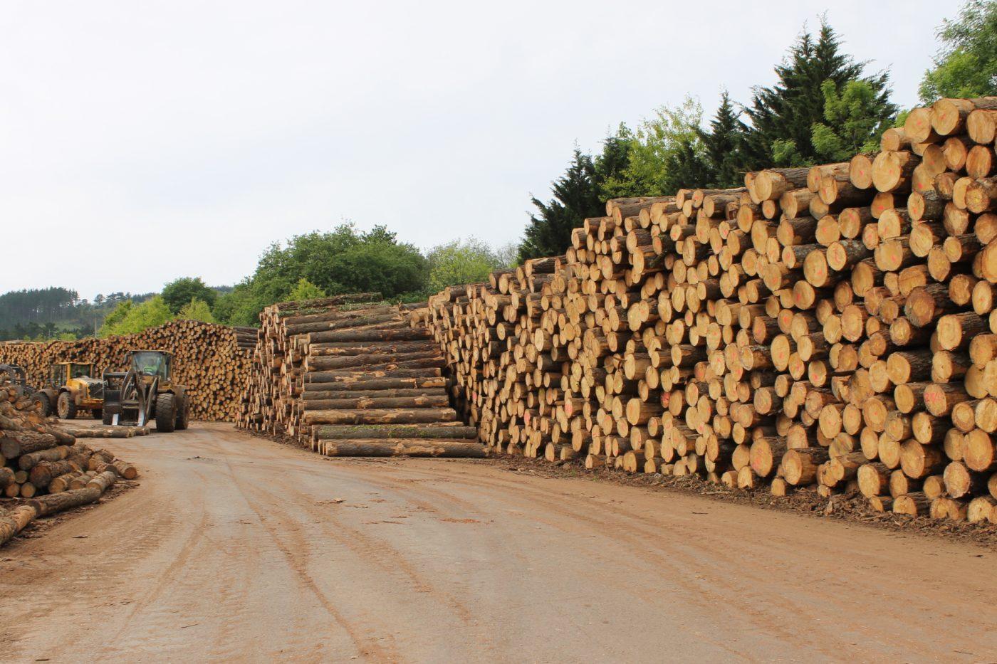 La escasez de suministro de madera en algunos mercados internacionales hará aumentar los precios durante el último trimestre de 2020 y en adelante