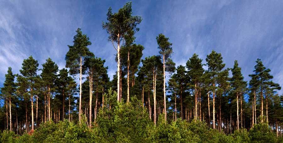 Duruelo de la Sierra quiere construir una planta de torrefacción de biomasa