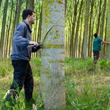 GARNICA realiza un programa de prácticas para estudiantes del sector forestal