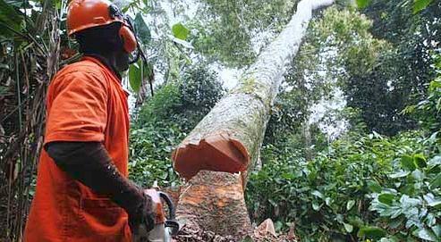 AEIM alerta sobre la tala ilegal en la República Democrática del Congo