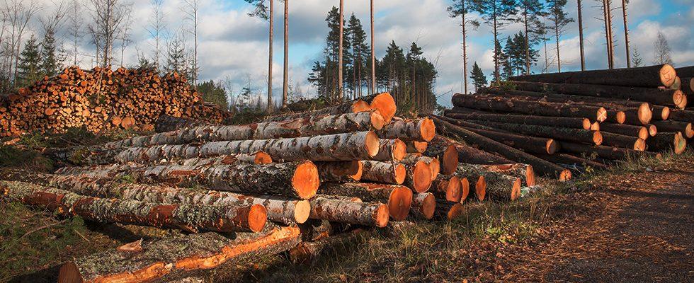 Duruelo de la Sierra, referente mundial en el sector de la biomasa
