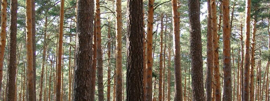 La II Jornada precongreso de Propiedad Forestal será el 23 de marzo