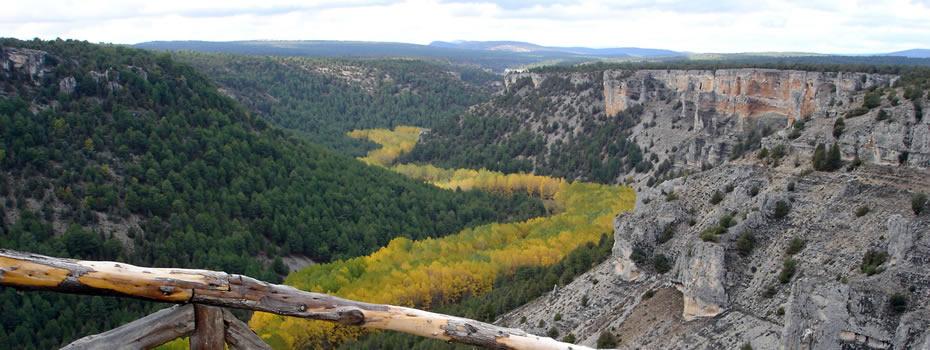 CESEFOR coorganiza la VI Semana Forestal Mediterránea