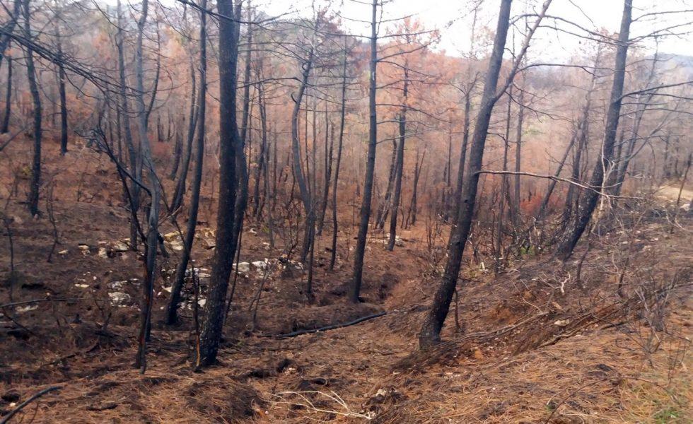 VEOLIA colabora en la prevención de incendios forestales a través de su compañía de biomasa ENERBOSQUE