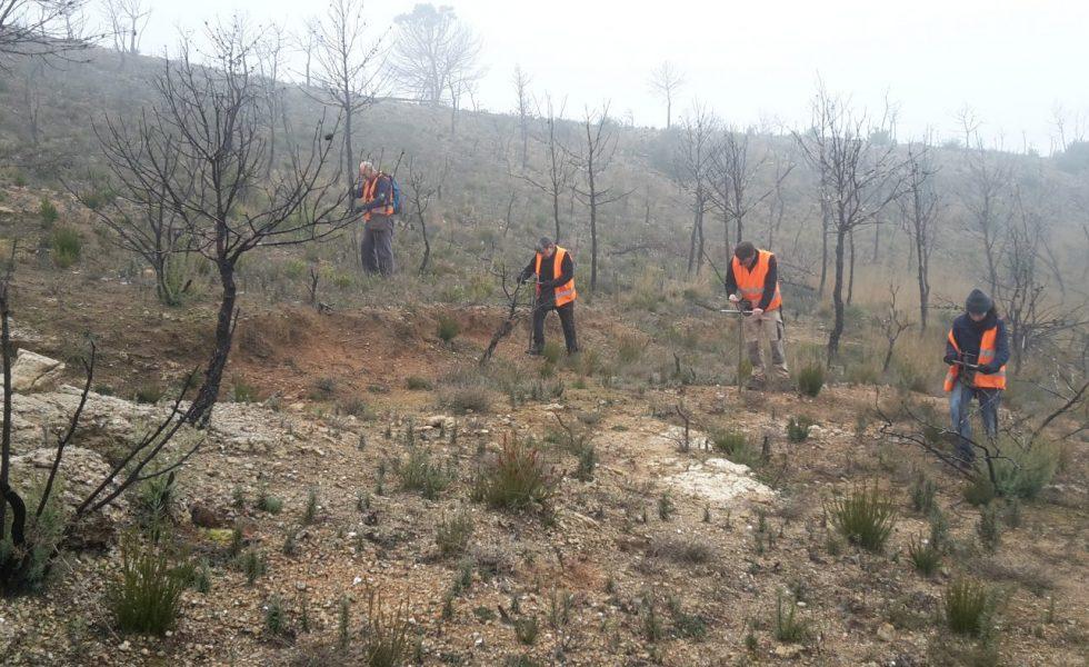 La siembra forestal reduce en un 50% los costes de restauración tras los incendios