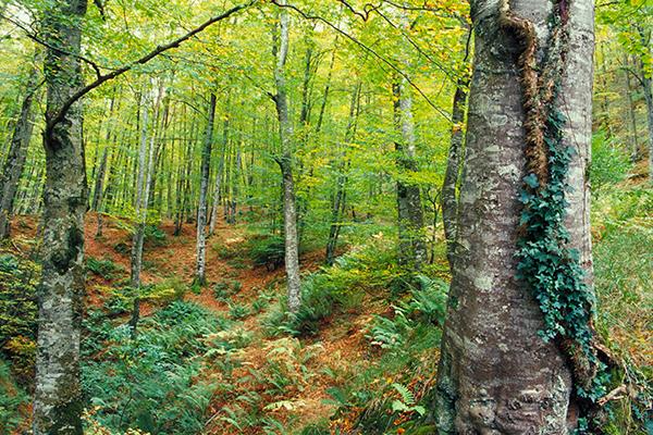 Nace SAGEFER, un Sistema Integrado de Apoyo a la Gestión Forestal en Red