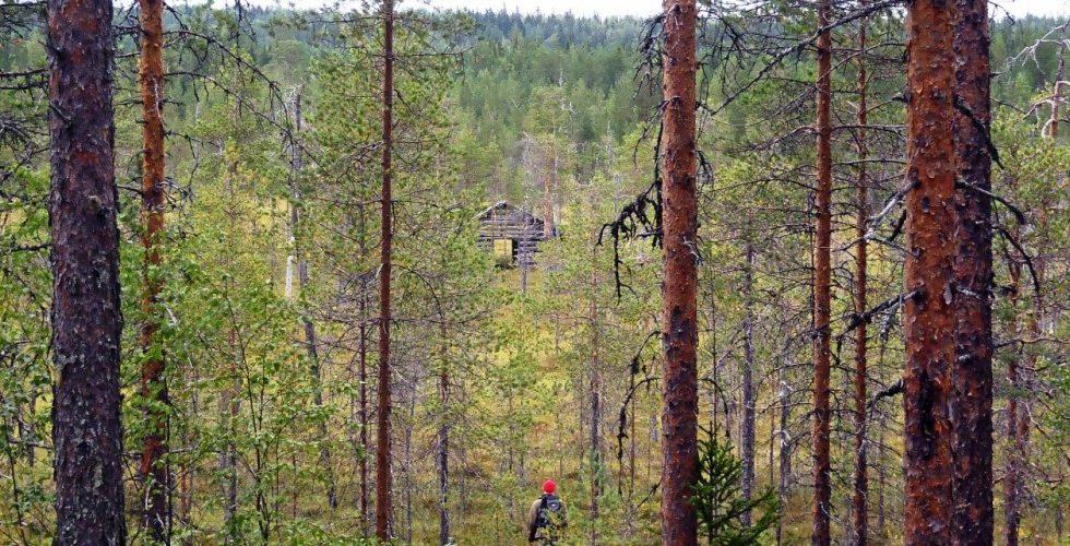 Los propietarios forestales europeos acogen con satisfacción la Estrategia de Bioeconomía de la UE
