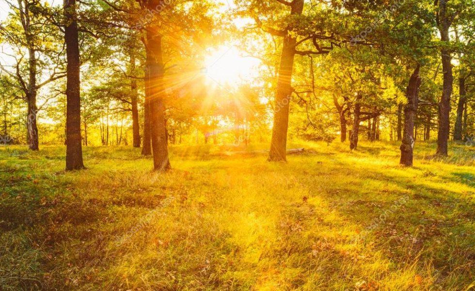 El deterioro de los bosques españoles en su lucha contra el cambio climático