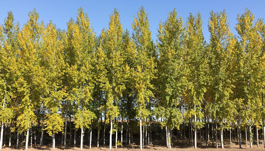 Más madera e industria local sostenible para tiempos difíciles