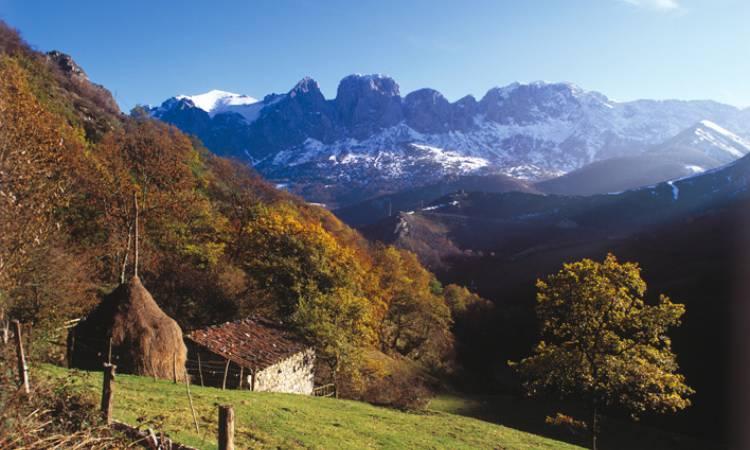 FSC presenta su certificación del bosque como herramienta para luchar contra la crisis climática