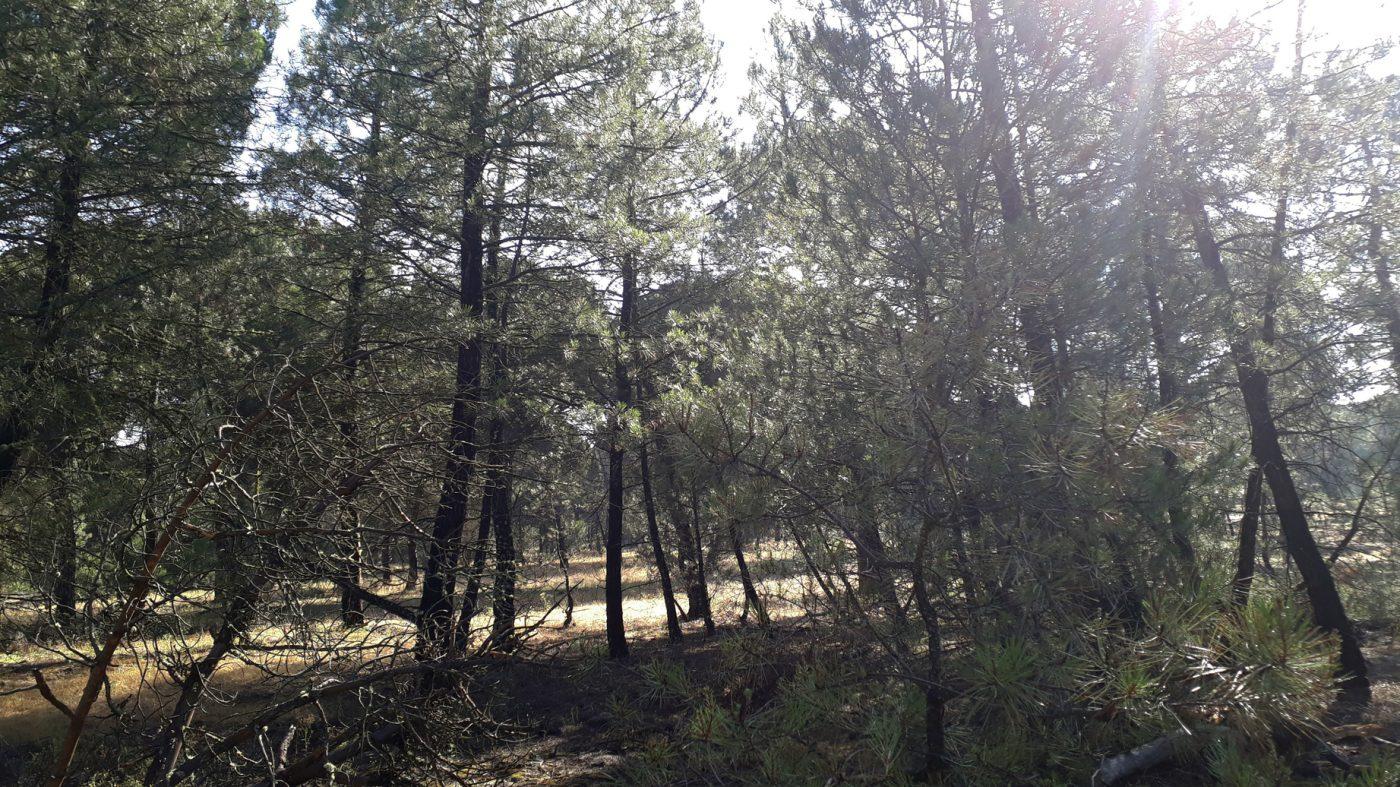 ASFOVA y Ayuntamiento de Iscar promueven la agrupación de parcelas para evitar el abandono de pinares