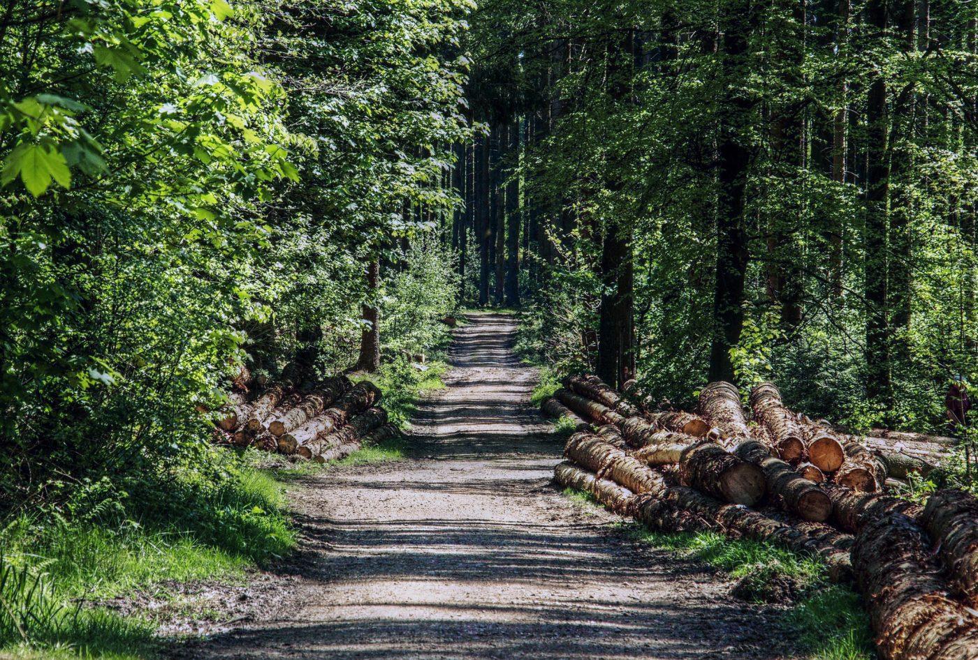La madera de los montes españoles aportó más de 100 millones de euros a la economía en 2018