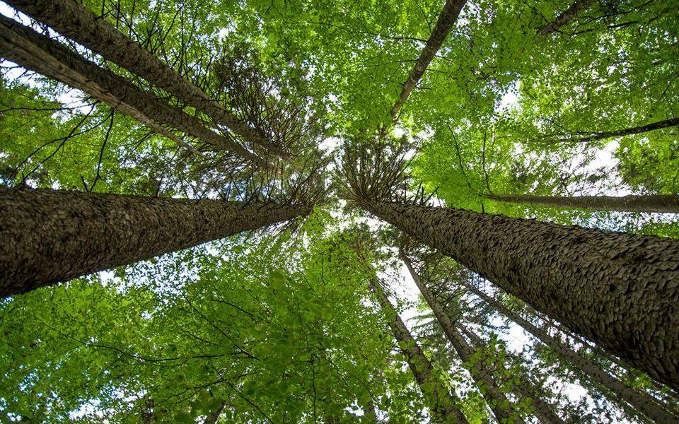 FAIR&PRECIOUS, la marca de madera africana legal, cumple un año