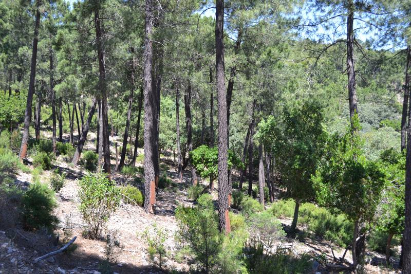 La Diputación de Soria concede 43.000 euros de ayudas a resineros