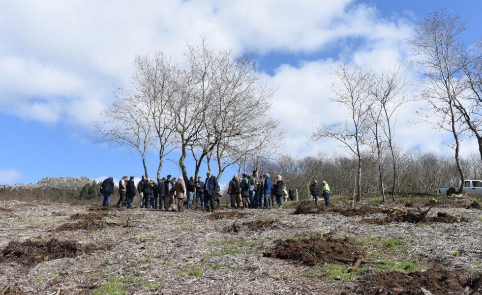 La Asociación Forestal de Galicia organiza un curso sobre gestión forestal para propietarios y gestores forestales
