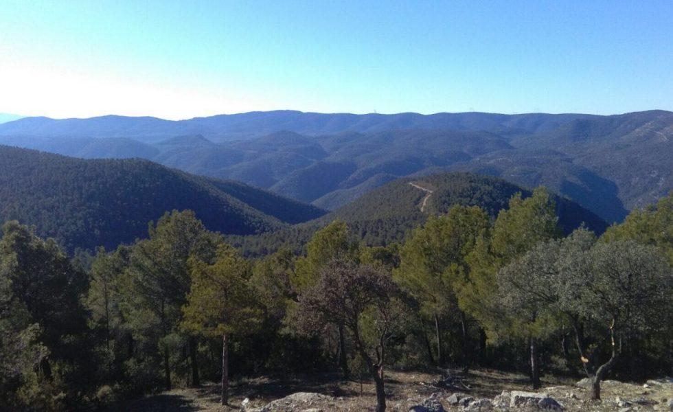 España es la 3ª superficie forestal europea, pero 8ª en aprovechamiento de la madera para energía