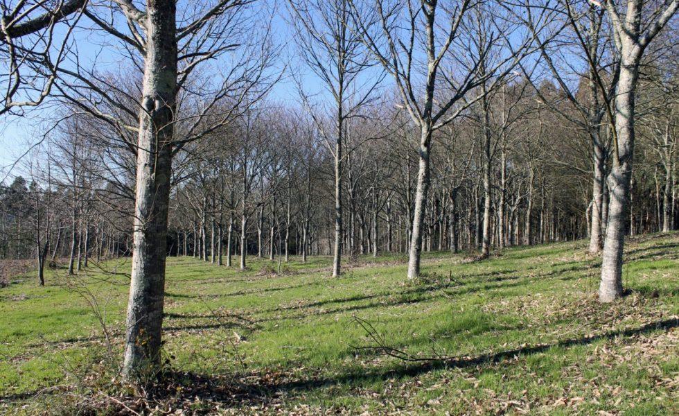 """""""Hay que dar certeza y estabilidad a la propiedad forestal"""""""