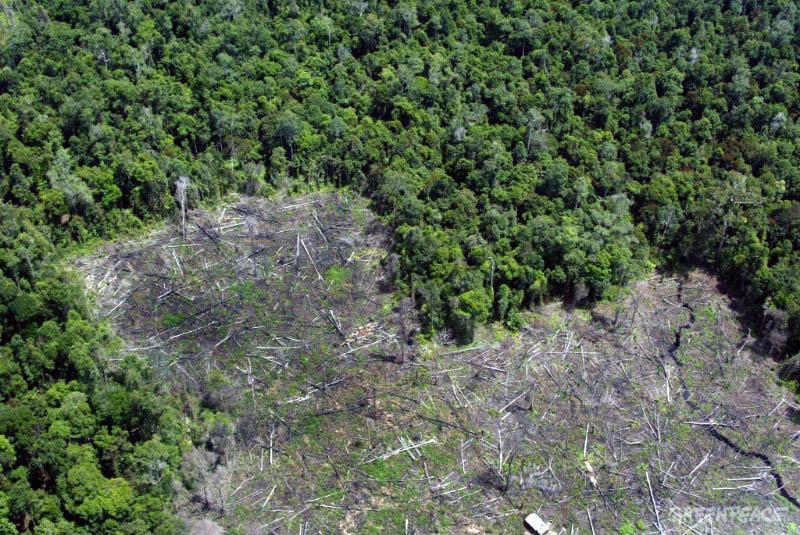 FOREST TRENDS evalúa los recientes desarrollos legislativos en Corea